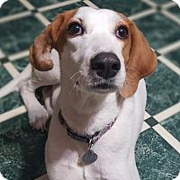 Adopt A Pet :: Lila - Knoxville, TN