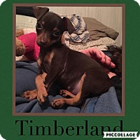 Adopt A Pet :: Timberland - Columbia, MD