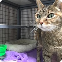 Adopt A Pet :: Phoebe - Diamond Springs, CA