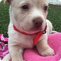 Adopt A Pet :: Kona - Santa Ana, CA