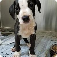 Adopt A Pet :: Juanito - Miami, FL