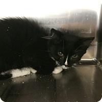 Adopt A Pet :: Vinny - Lunenburg, MA