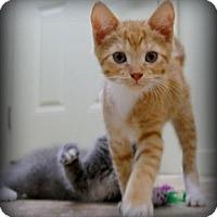 Adopt A Pet :: Sonny - Big Canoe, GA