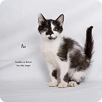 Adopt A Pet :: Rio - Arcadia, CA