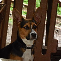 Beagle Mix Dog for adoption in Old Town, Florida - Rascal