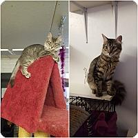 Adopt A Pet :: MAVERICK & MOE - Phoenix, AZ