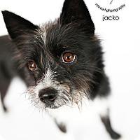 Adopt A Pet :: Jacko - Sherman Oaks, CA