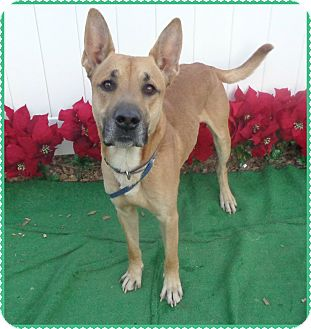 German Shepherd Dog Mix Dog for adoption in Marietta, Georgia - RUSTY