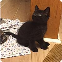 Adopt A Pet :: Duke - Whitehall, PA