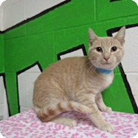 Adopt A Pet :: 16C-1516 (12/4) - Rome, GA