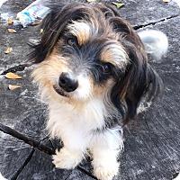 Adopt A Pet :: John Stamos - Fort Atkinson, WI