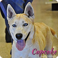 Adopt A Pet :: Cupcake--Foster needed! - Carrollton, TX