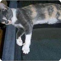 Adopt A Pet :: Twilight - Odenton, MD
