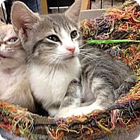 Adopt A Pet :: Cassidy - Fort Lauderdale, FL