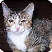 Adopt A Pet :: Ursa - Lombard, IL