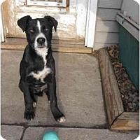Adopt A Pet :: Scoobie - Wahoo, NE