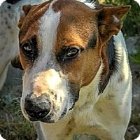 Adopt A Pet :: Zeke - Austin, TX