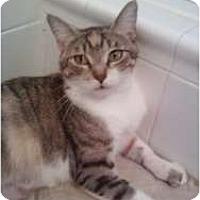 Adopt A Pet :: Tatum - Fort Lauderdale, FL