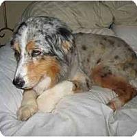 Adopt A Pet :: Panda - Orlando, FL