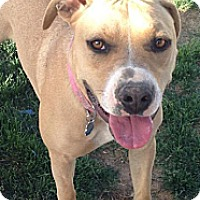 Adopt A Pet :: Bailey - Cedar City, UT