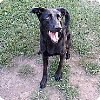 Adopt A Pet :: Zoey - Fort Riley, KS