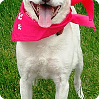 Adopt A Pet :: Daisy - Osseo, MN