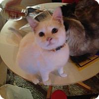 Adopt A Pet :: Zomie - Kelso/Longview, WA
