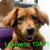 Adopt A Pet :: Lafayette - baltimore, MD