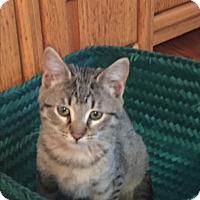 Adopt A Pet :: Bert - Kelso/Longview, WA