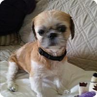 Adopt A Pet :: Benny - Ocean Ridge, FL