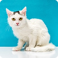Adopt A Pet :: Joe - Chandler, AZ