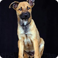 Adopt A Pet :: Chewy - SAN PEDRO, CA