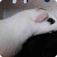 Adopt A Pet :: *Urgent* Patches - Fullerton, CA