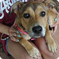 Adopt A Pet :: Kyra - Atlanta, GA
