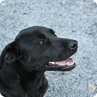 Adopt A Pet :: Meesha - Albany, NY