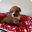 Adopt A Pet :: Stone Cold Steve Austin