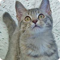 Adopt A Pet :: Pippa - Chambersburg, PA