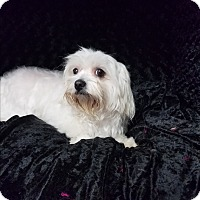Adopt A Pet :: Candie Turner - Urbana, OH