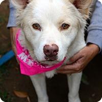 Adopt A Pet :: Dottie - West Grove, PA