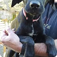 Adopt A Pet :: Gronk - Charlestown, RI