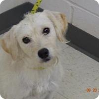 Adopt A Pet :: Tarot - Gulfport, MS