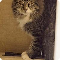 Adopt A Pet :: Junior (& Mocha) - Herndon, VA