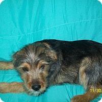 Adopt A Pet :: FRAZIER - EASTPOINTE, MI