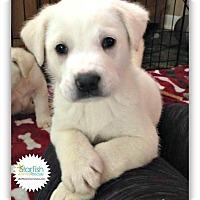 Adopt A Pet :: Polaris - Plainfield, IL