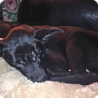 Adopt A Pet :: Buddy-Pending Adoption - Lancaster, PA