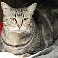 Adopt A Pet :: Fleek - Yukon, OK