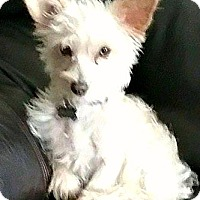 Adopt A Pet :: Daffodil-Adoption Pending - Boulder, CO