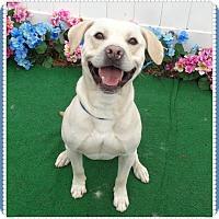 Adopt A Pet :: OPIE - Marietta, GA