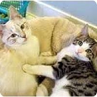Adopt A Pet :: Izzy & Parker - Arlington, VA