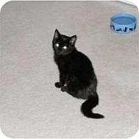 Adopt A Pet :: Joy Oh Joy - McDonough, GA